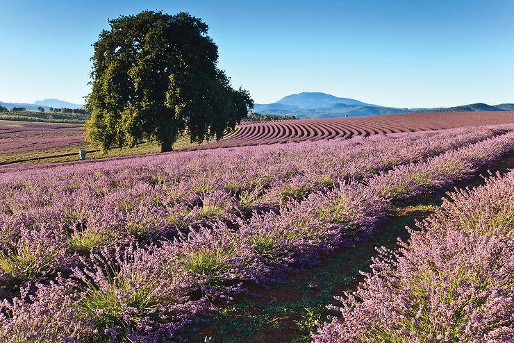 La Tasmanie, côté nord : villages historiques et route des vins