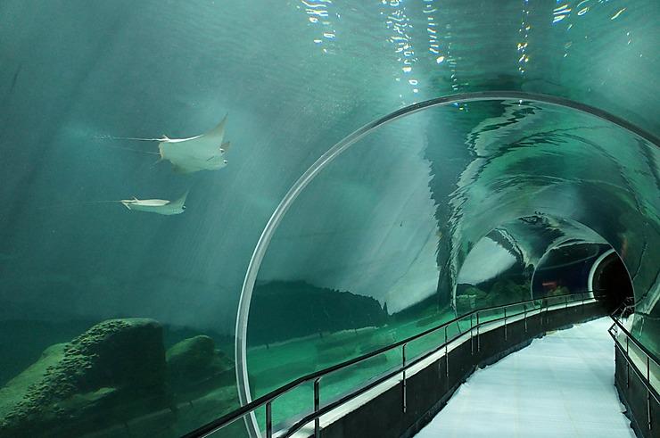 Brésil - Rio de Janeiro : ouverture du plus grand aquarium d'Amérique latine