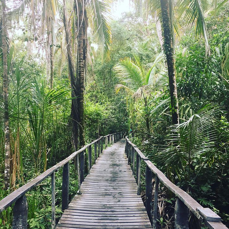 Parc National de Cahuita, Costa Rica