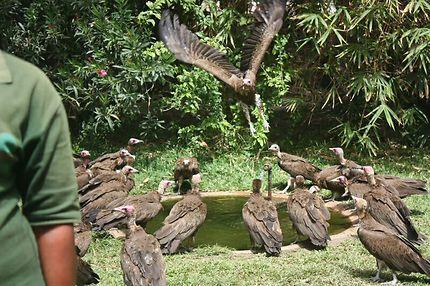 Le parc aux vautours