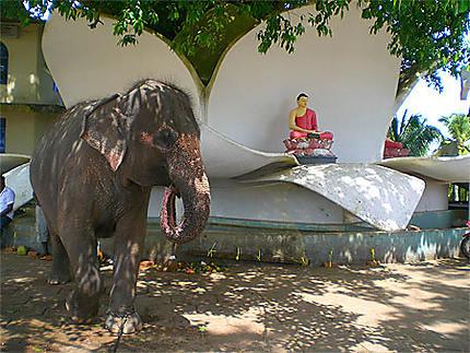 Fleur de lotus et éléphant