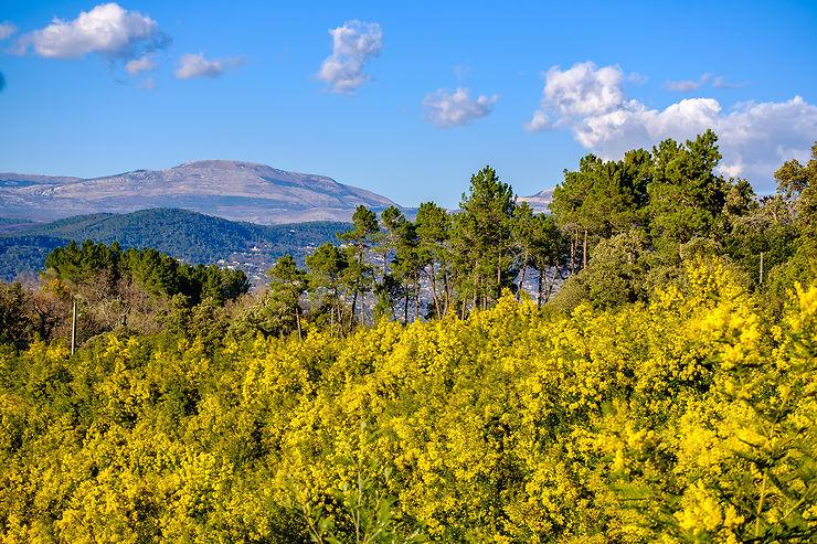 La Côte d'Azur en fleurs et en fête : Nice, Menton, Bormes