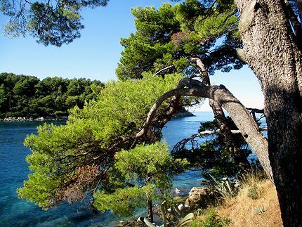 Cavtat aux beaux paysages marins