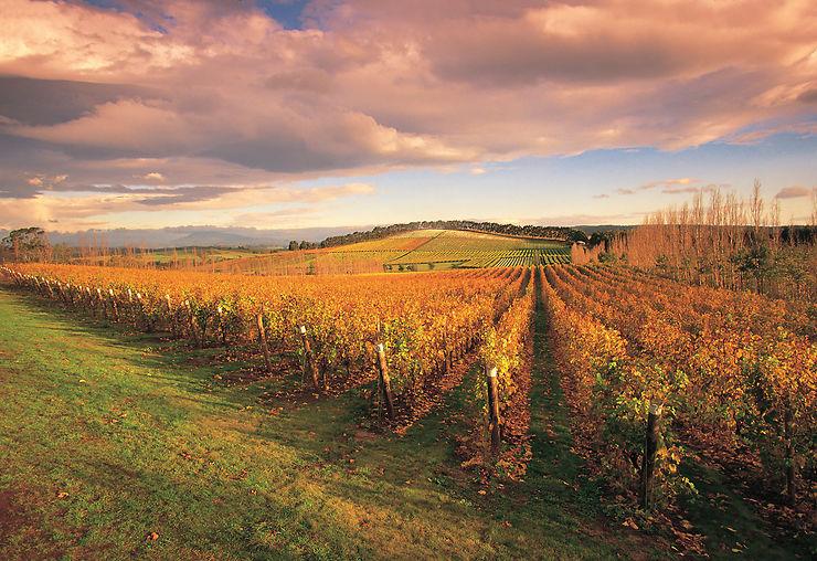 La vallée de la rivière Tamar et la route des vins
