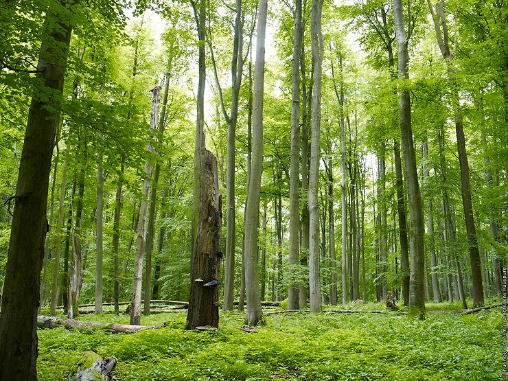 Le parc national de Hainich