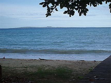 Varan sur la plage