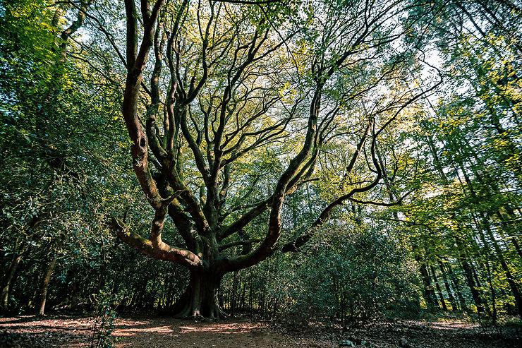Forêt de Brocéliande – Ille-et-Vilaine, Morbihan