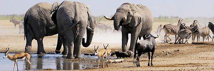 Eléphants au point d'eau dans le Parc d'Etosha