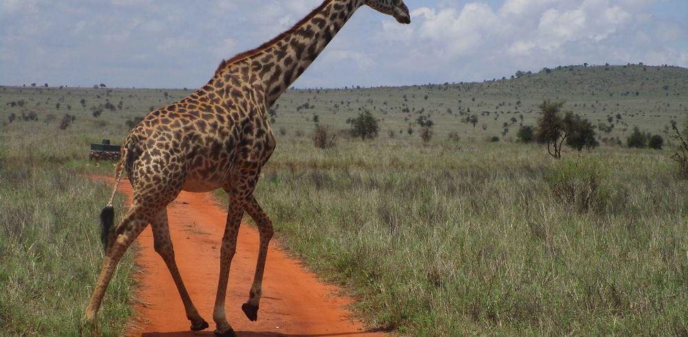 Récit de voyage : 8 jours au Kenya en octobre/novembre 2018
