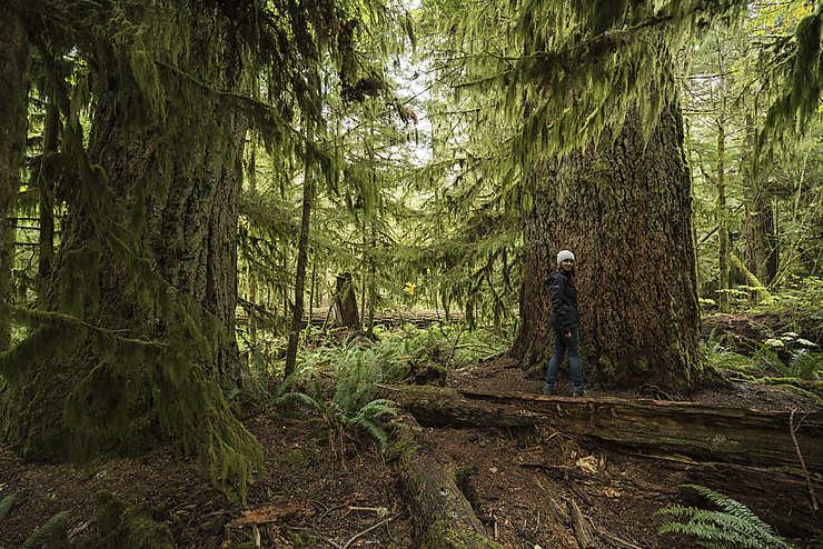 Colombie-Britannique : Into the Wild sur l'île de Vancouver