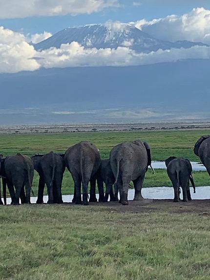 Les éléphants devant le Kilimandjaro
