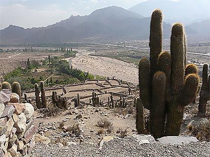Cactus et ruines