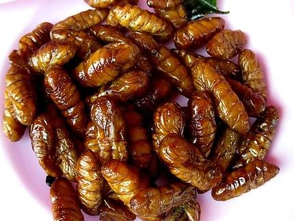 Gastronomie et insectes