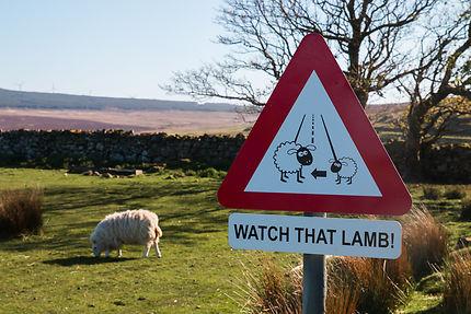 """""""Watch that Lamb"""""""