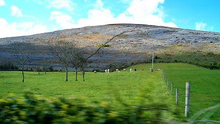 Irlande contrastée