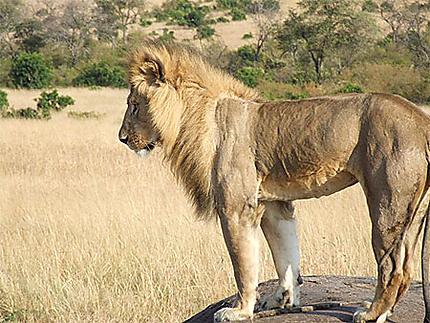 Kenya 2010