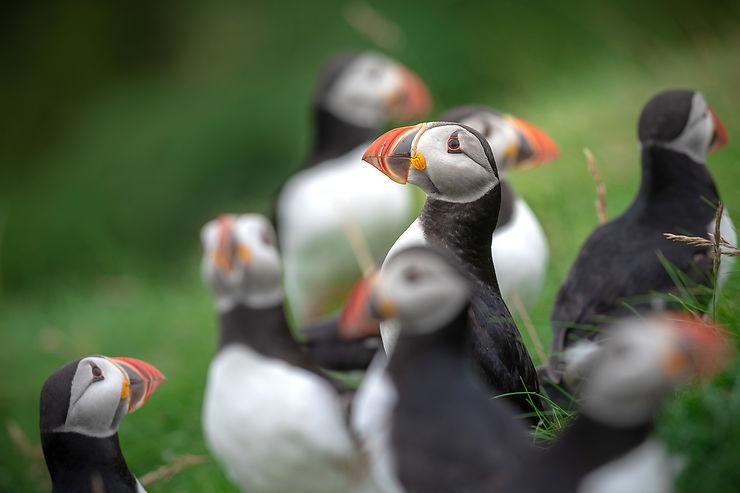Au large, des radeaux et des milliers d'oiseaux