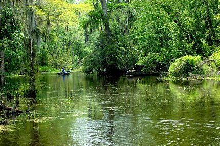 Au coeur du bayou