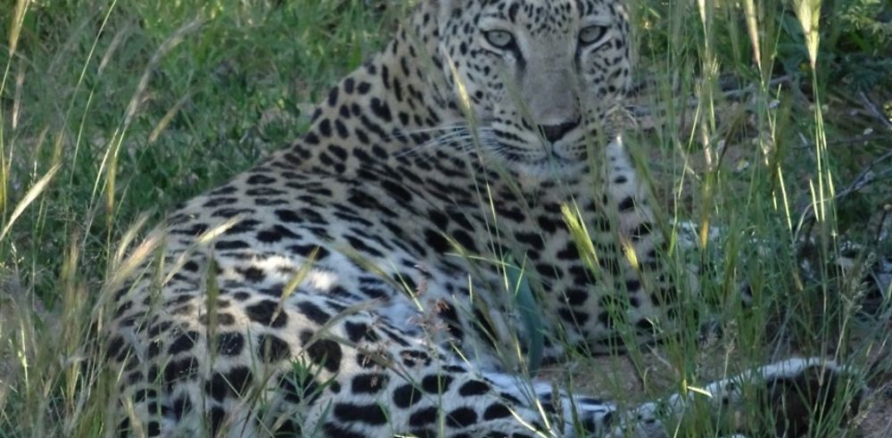 3 semaines en mai en Namibie : voyage magique
