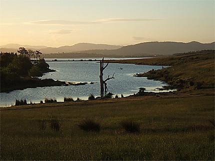 Bush tasmanien