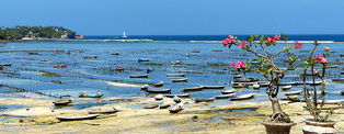 Voyage à Bali © Theoo