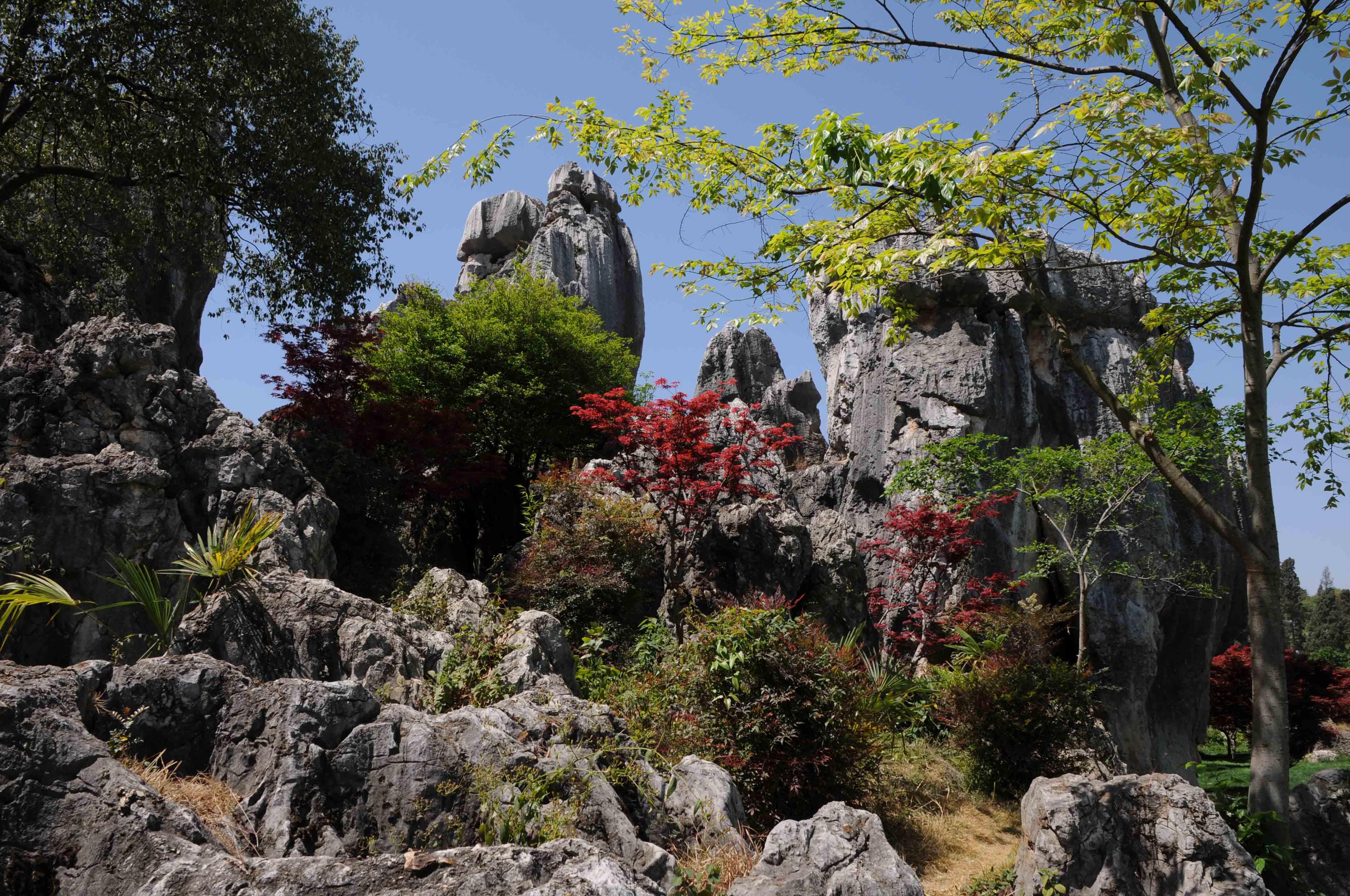 Shilin (Forêt de Pierres) - Chine
