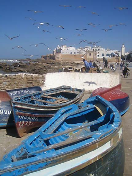 Les mouettes d'Essaouira