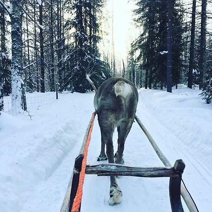 Rencontre avec Sven en Laponie