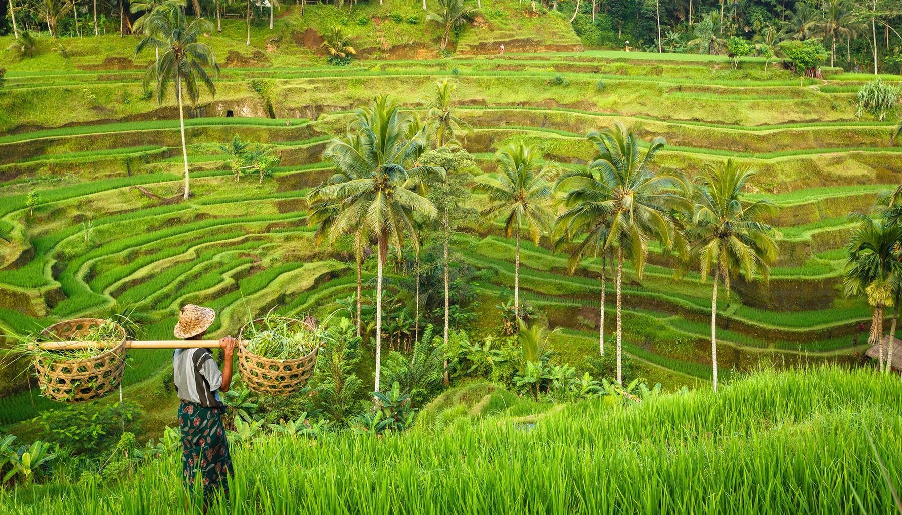 Meilleur site de rencontres Bali