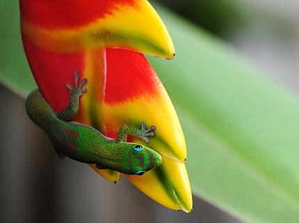 Bataille de couleurs, animal versus végétal