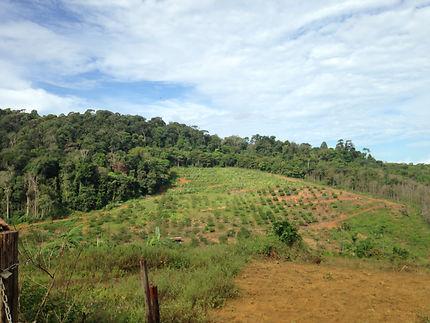 Terres cultivées autour de Cacao