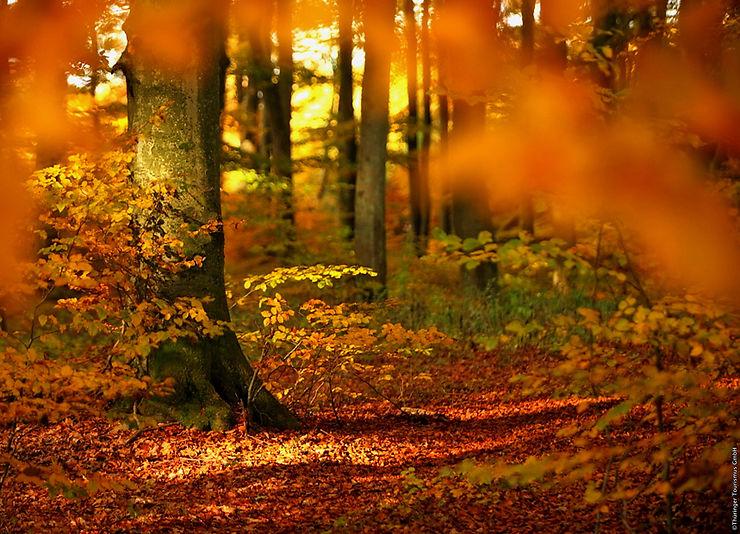 Jour 4. Les beautés naturelles du parc national de Hainich