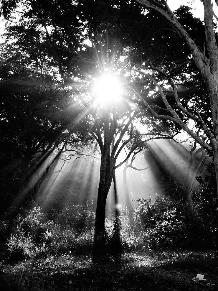 Sunshining tree, Australie, par lilladybug68