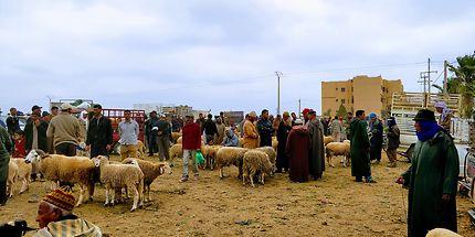 Marché aux moutons à Taroudant, Maroc
