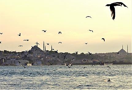 Vol de mouettes sur Istanbul