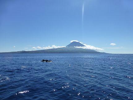 Go Azores !