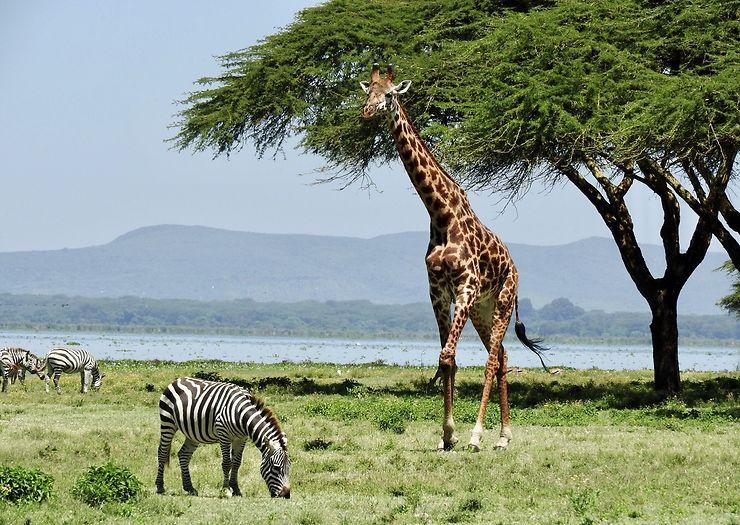 Balade à Crescent Island, Kenya