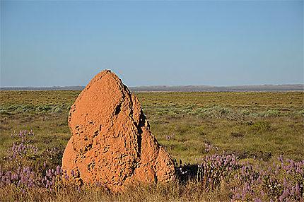 Termitière australienne
