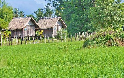 Don Det - sur les bras du Mekong
