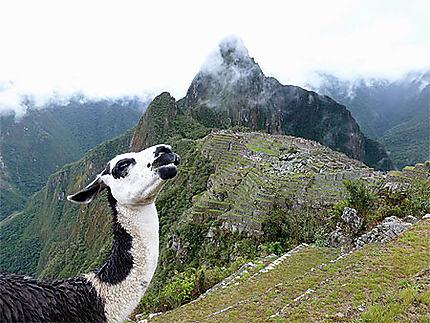 Rencontre au Machu-Picchu