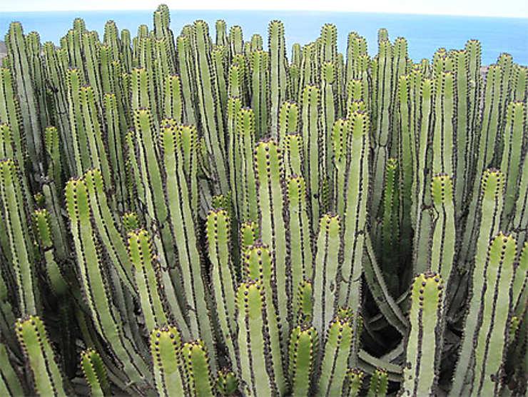 Sur la piste de Cofete, Fuerteventura, Canaries