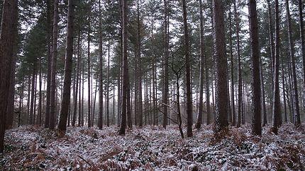 Forêt endormie sous la neige en Belgique
