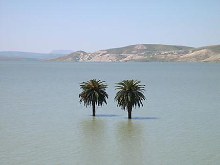 Palmiers au milieu d'un desert... aquatique