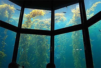 La Kelp Forest