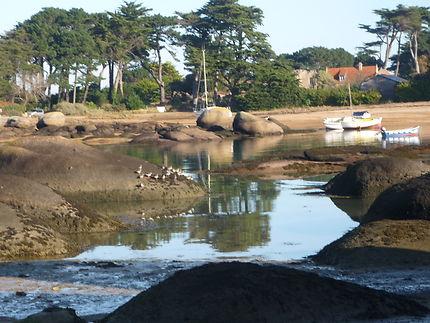 Oiseaux de l'estran, baie Sainte-Anne à Trégastel