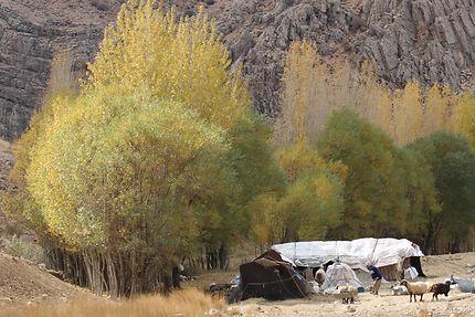 Nomade Qachqaï