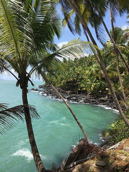 Cocotiers, les pieds dans l'eau, Guyane