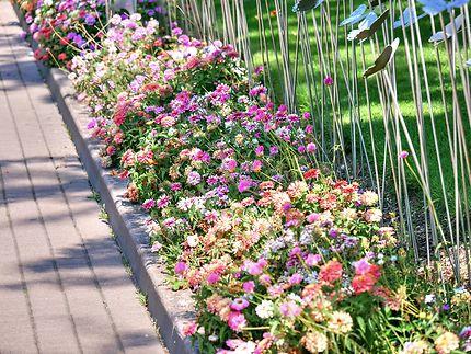 Parterre de fleurs au Parc du Futuroscope