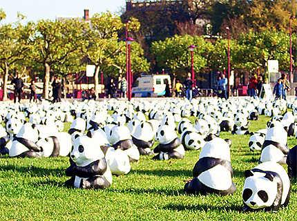 Pandas devant le Rijksmuseum