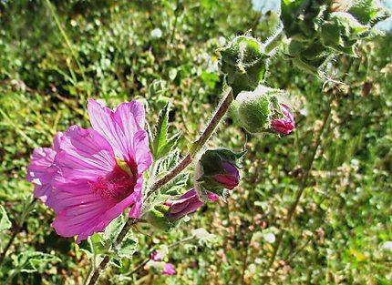 Balade et fleurs sauvages
